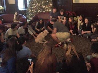 Puppy Study Break 2016